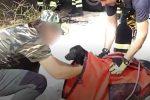 Vittoria, cane cade in un pozzo profondo 30 metri: il video del salvataggio