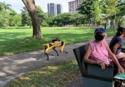 Coronavirus, a Singapore un cane robot fa rispettare il distanziamento sociale Spot, il cane robot di Boston Dynamics, trasmette un messaggio registrato per ricordare alle persone di mantenere la distanza di sicurezza - Corriere Tv