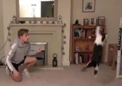 Il gatto è un portiere straordinario: i salvataggi a quattro zampe Le esibizioni del gatto di casa dello youtuber Chris Dixon - Dalla Rete