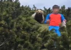 In Trentino spunta un orso alle spalle del bambino (che non perde la calma) La scena girata sopra la malga di Nova di Sporminore - Ansa
