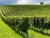 Istat: in flessione il settore agricolo, si rafforza l'agroalimentare