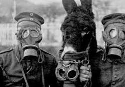 Dieci milioni tra cavalli, muli e asini; 200mila piccioni e colombi viaggiatori; oltre 100mila cani. E ancora, maiali, buoi e polli. Un totale di 16 milioni di animali. Sono questi i numeri dell'esercito a quattro zampe che affiancò, durante la Prima Guerra mondiale, i 74 milioni di soldati c...