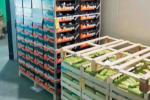 Amantea, nuovi sigilli al mercato ortofrutticolo: duro colpo all'economia locale