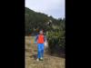 Trentino, l'orso esce dai cespugli: il bambino non perde la calma e si salva
