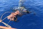 Capodoglio intrappolato dalle reti da pesca al largo di Lipari, salvato dai volontari