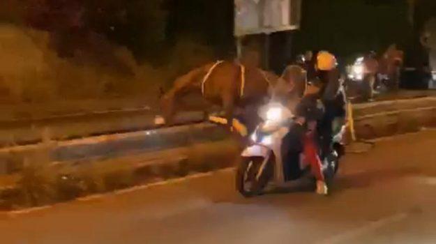 corse di cavalli, Messina, Sicilia, Politica