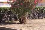 Spiagge, alberi e rifiuti: la guerra d'agosto di Messina Servizi per la sanificazione