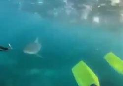 Australia, incontro ravvicinato con uno squalo per due adolescenti Durante una battuta di pesca di due fratelli, di 16 e 13 anni - Ansa
