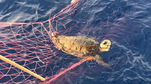 pesca, pesce spada, rete, tartaruga, Reggio, Calabria, Cronaca