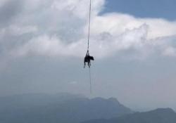 La «mucca volante»: l'operazione di salvataggio con l'elicottero Una mucca caduta in una scarpata sotto una strada provinciale di Arsiero (Vicenza) è stata recuperata con l'ausilio dell'elicottero dei Vigili del Fuoco - CorriereTV