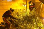 Scoperta serra con 33 piante di cannabis a Cutro, arrestato un 29enne