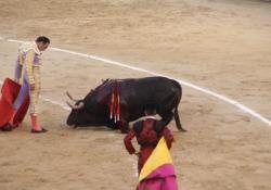 Spagna, l'agonia dei tori durante la corrida: il video-denuncia le immagini riprese e diffuse dalla Lav: «Tutto questo deve finire»» - Corriere Tv