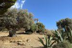 Musica, cibo e antichi sapori nella Valle dei Templi: al via Diodoros food experience