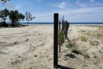 Spiana alcune due sul litorale di Steccato di Cutro, denunciato il responsabile
