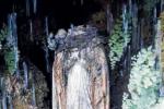 Vandali a Galati Mamertino, decapitata una statua della Madonnina