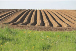 Agricoltura: Crea, nel primo trimestre 2020 valore aggiunto -1,9%