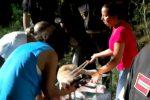Messina, vigili del fuoco salvano un cane finito in una trappola per cinghiali a Castanea