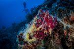 """Progetto """"Mare Caldo"""" per cambi climatici, Greenpeace studia gli ecosistemi marini costieri"""