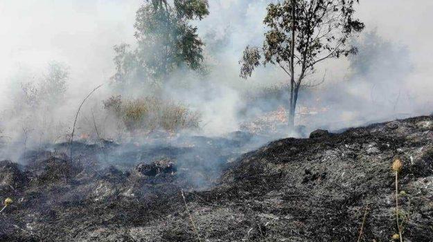 incendio, vegetazione, Cosenza, Calabria, Cronaca