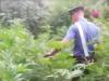 Blitz a Rosarno e San Ferdinando, scoperte due piantagioni di marijuana: 4 arresti
