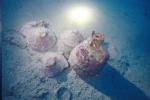 Siracusa, ritrovato nei fondali di Ognina il relitto di un'antica nave: le foto
