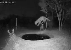 Sudafrica, lo spavento del leopardo disturbato mentre si disseta: il video diventa virale La scena ripresa da una telecamera a infrarossi - Ansa