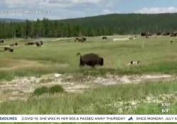 Usa, donna sfugge alla carica del bisonte fingendosi morta: illesa La scena filmata nel parco di Yellowstone. La donna è inciampata mentre scappava ed è rimasta immobile e l'animale non le ha fatto nulla - Corriere Tv