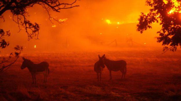 california, incendi, Sicilia, Mondo