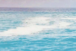 Mare sporco a Fuscaldo, Paola, Acquappesa e Cetraro