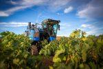 Domanda Unica, in arrivo altri 7 milioni per gli agricoltori calabresi