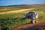 Agricoltura biologica, alla Calabria 20 milioni dal Psr