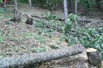 Abbatte abusivamente dieci alberi, 39enne denunciato a Petilia Policastro