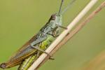 Bayer al fianco di Kenya e Uganda nella lotta contro le locuste