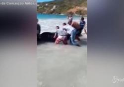 Brasile: cucciolo di balena arenato, turisti e volontari cercano di salvarla Il piccolo incidente nella spiaggia di Arraial do Cabo, nello stato di Rio de Janeiro - LaPresse/AP