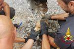 Platania, cagnolina resta incastrata in un'intercapedine, salvata dai vigili del fuoco