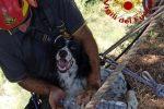 Lipari, un cane finisce in un dirupo di 30 metri: salvato dai vigili del fuoco