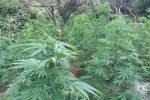 Droga nella Locride, scoperte due grandi piantagioni di marijuana: quattro arresti