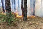 "Calabria Verde, commissario Oliva: ""Già operativi nella campagna antincendio 2021"""