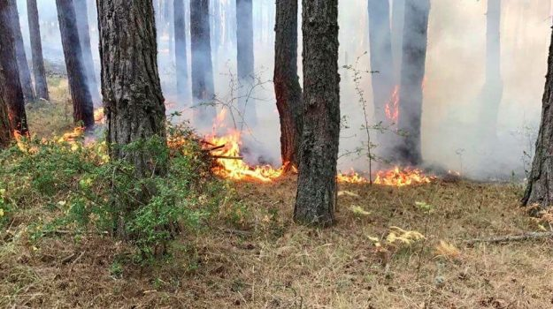 calabria verde, incendi, Calabria, Cronaca