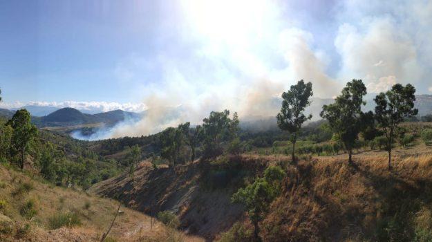acquaformosa, altomonte, incendio, Cosenza, Calabria, Cronaca