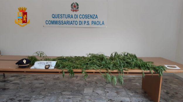 marijuana, paola, Cosenza, Calabria, Cronaca