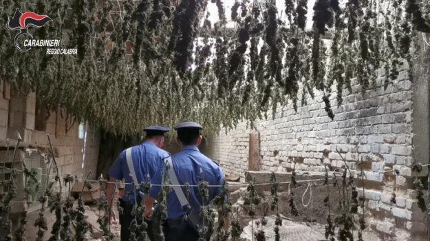 L'essiccatoio della marijuana a Taurianova: sequestrata droga per 3 milioni