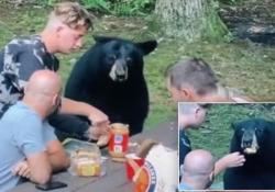 Picnic (e selfie) con l'orso nero goloso di burro d'arachidi Il video ripreso in una foresta nello stato americano del Maryland - CorriereTV
