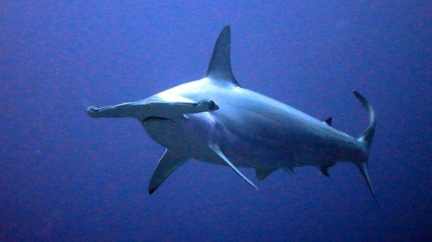 mare, squalo, trapani, Sicilia, Cronaca