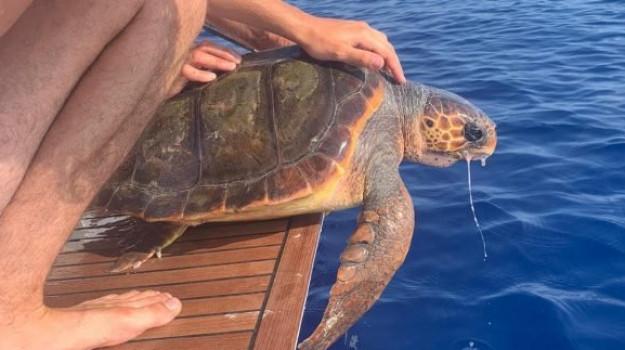 tartaruga caretta caretta, velisti, Messina, Sicilia, Cronaca