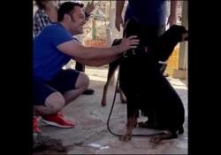 Tiziano Ferro adotta un nuovo cane dopo la morte del suo Beau Il cantante sui social: «. Caro Jake, basta canile per te...» - Corriere Tv