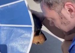 Tiziano Ferro e le lacrime per il suo cane operato d'urgenza: «Anche oggi non tornerà a casa» «Non so come faremmo senza l'amore che stiamo ricevendo» - Corriere Tv