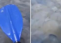 Ucraina, mare di Azov infestato di meduse: il remo non riesce a toccare l'acqua Una famiglia di canoisti bloccata dalle meduse - Corriere Tv