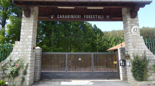 mongiana, Catanzaro, Calabria, Cultura