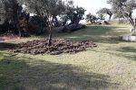 """Emergenza cinghiali a Stalettì, Coldiretti: """"Invasa la Casa di Spiritualità Nazareth"""""""